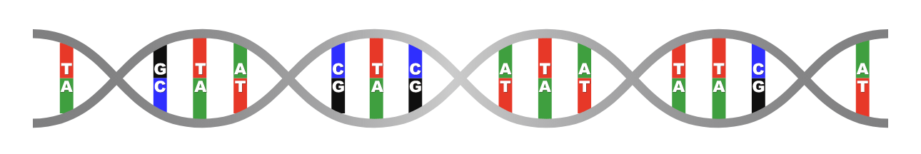 cDNA synthesis, following mRNA extraction